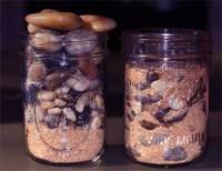 Sand and Pebbles in Jar - Philosophical Stories for Children