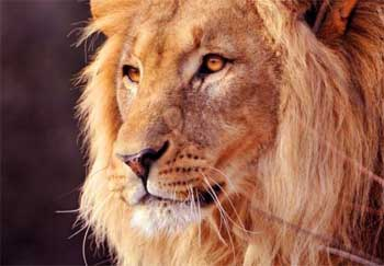 Self Awareness Short Stories - Lion and Sheep Story with Moral Lesson