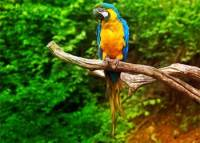 Parrot and Snake Story - Handling Difficult Situation with Cleverness Story