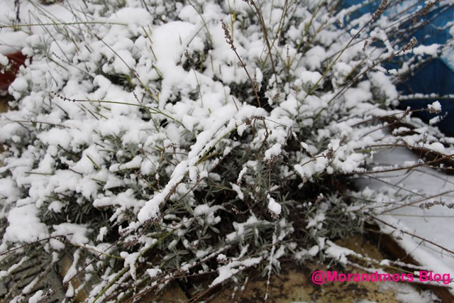 Ode à la neige Mors 17