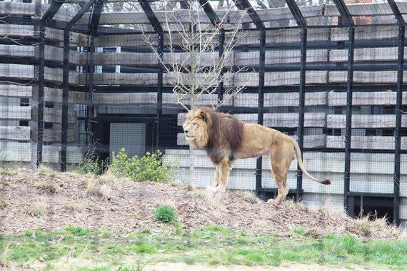 Une après midi au Zoo de Vincennes