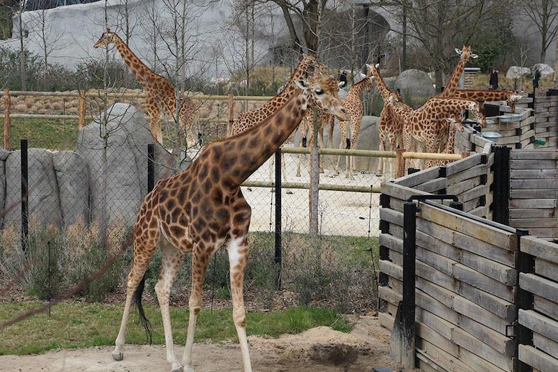 Morandmors_Zoo de Vincennes _9
