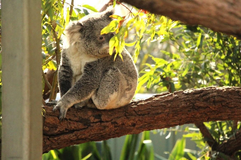 Australie-sydney_morsblog 13
