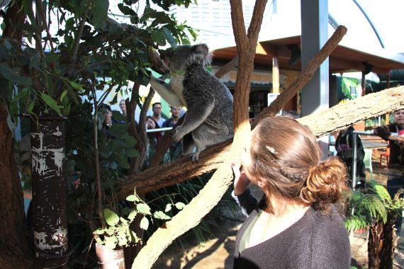 Notre joli voyage au pays des Kangourous – Sydney