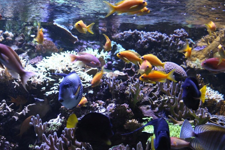 Aquariumportedoree-paris_morsblog 18