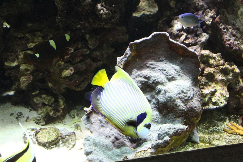 Aquariumportedoree-paris_morsblog 21