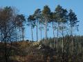 Skalka nad Klimentským rybníkem, Lokalita představuje nevýrazně vyvinuté společenstvo boreokontinentálních borů (společenstvo SLT 0Z).