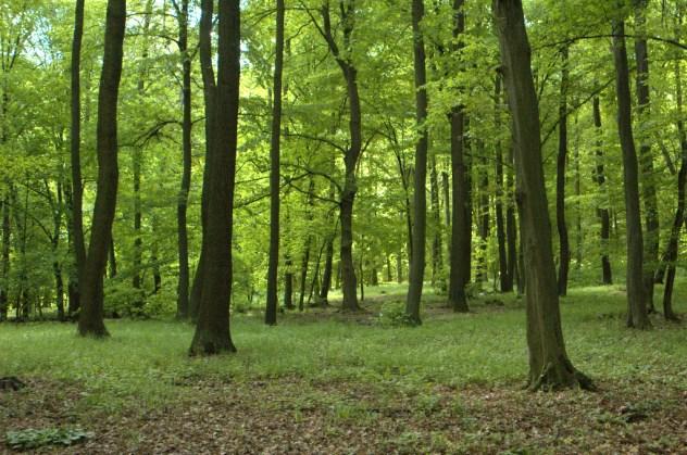 Panonské dubohabřiny jsou typickými lesními společenstvy Ždánického lesa.