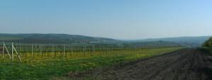 Pohled ze Slunečné (nad Velkými Pavlovicemi) na Kraví horu.