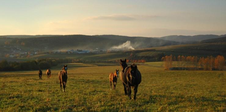 Pastviny v okolí Vlachovic. V pozadí Haluzická pahorkatina.