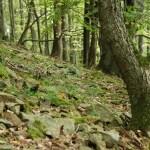 Karpatské dubohabřiny (Svaz Carpinion)