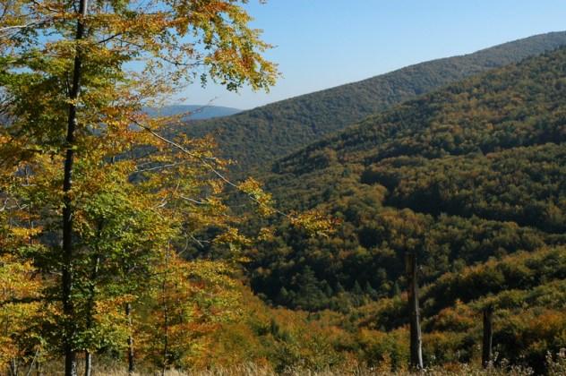Podzimní nálada nad Vlárským průsmykem. Pohled na bučiny na úbočí Chladného vrchu.