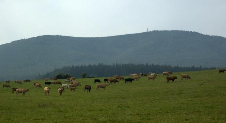 Pohled přes pastviny Provodovického hřbetu na dominantu Kelčského Javorníku (864 m).