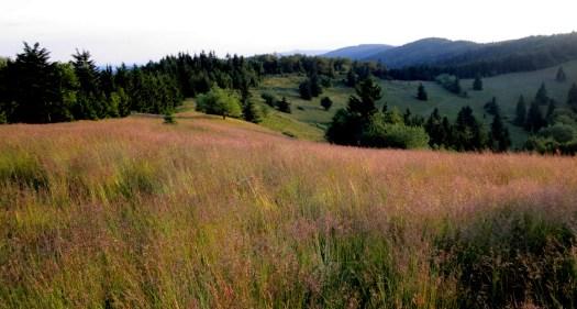 Velký Javorník (1071 m) je nejvyšším vrcholem Javorníků. Dodnes je patrné odlesnění.