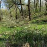Měkké luhy nížinných řek (Svaz Salicion albae)