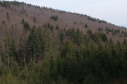 Smíšené porosty v údolí Trubisek.
