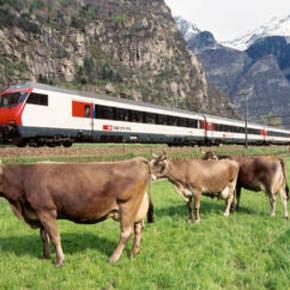 vaches-et-train_swissworldorg.1226783936.jpg