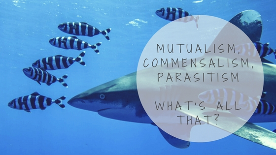 Mutualism Commensalism Parasitism What's All That