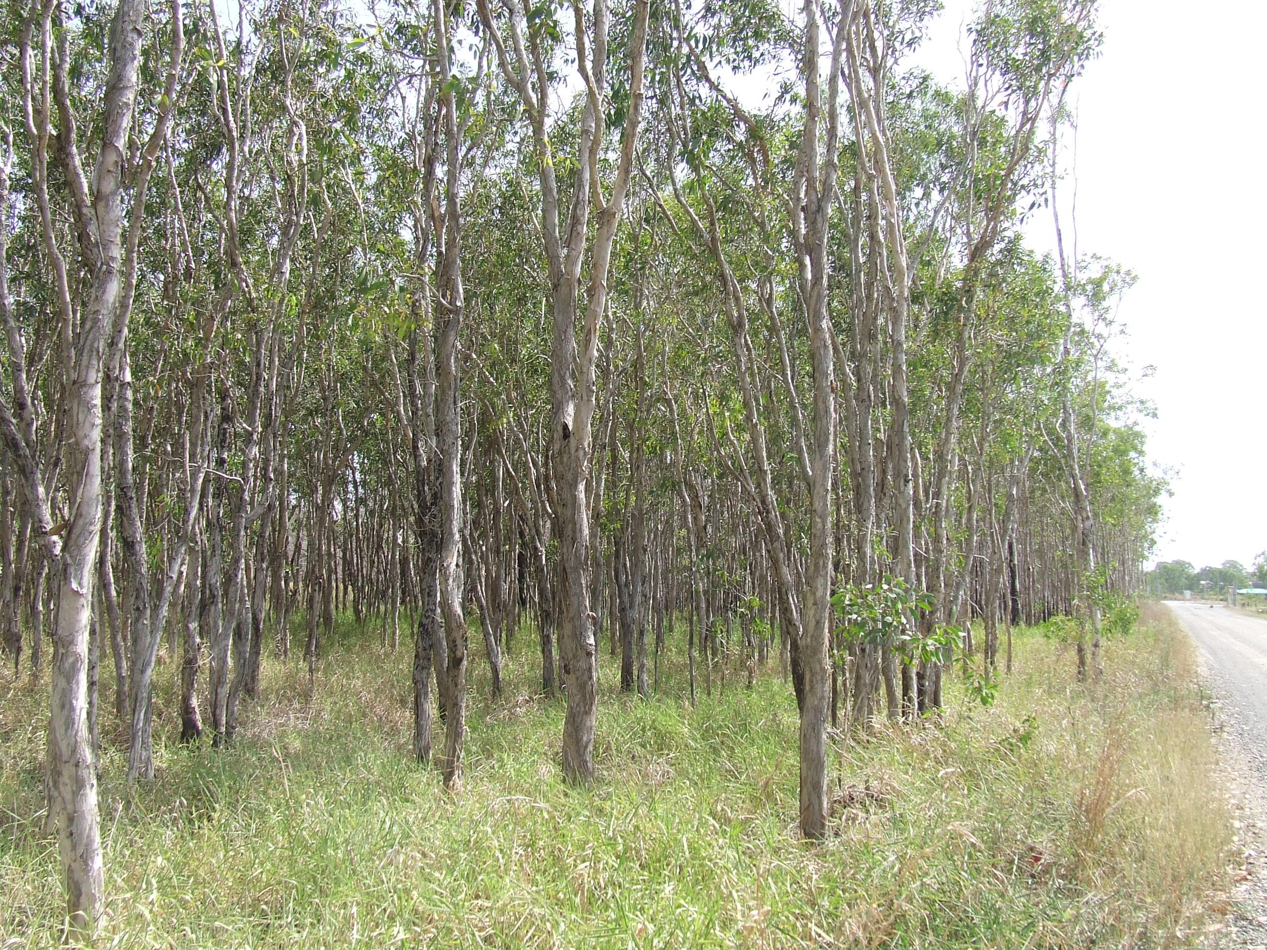 2008_1201swamptrees0004