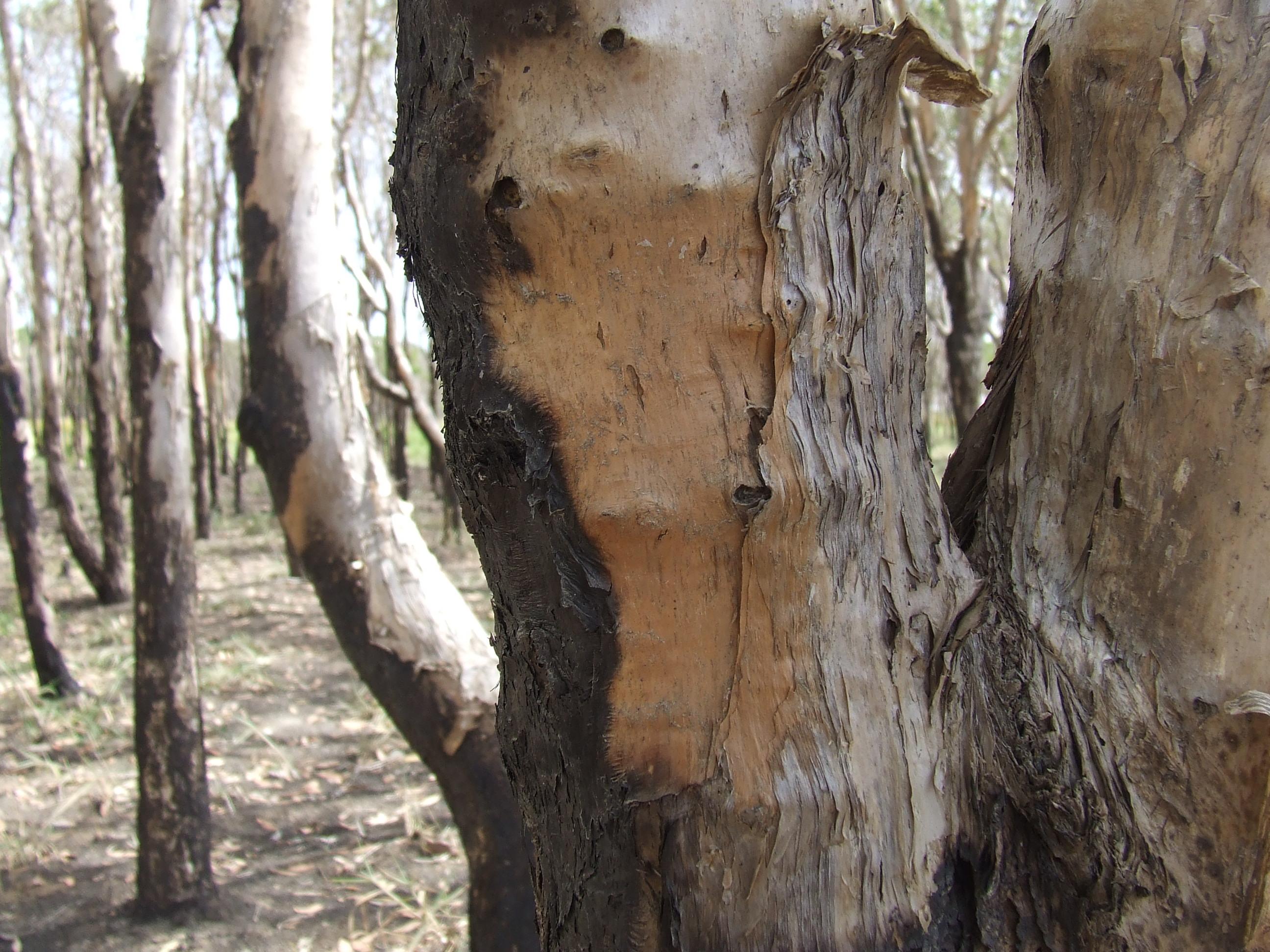 2008_1201swamptrees0007