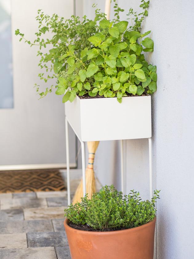 Haus Eingangsbereich mit Kindern_Plant Box
