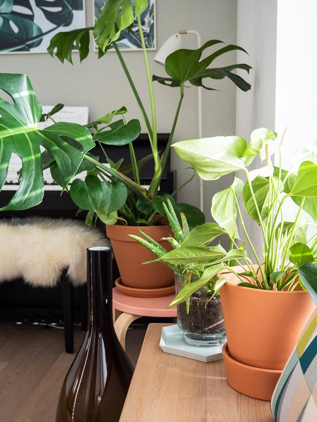 Urban Jungle Trend an Wand_Grünpflanzen