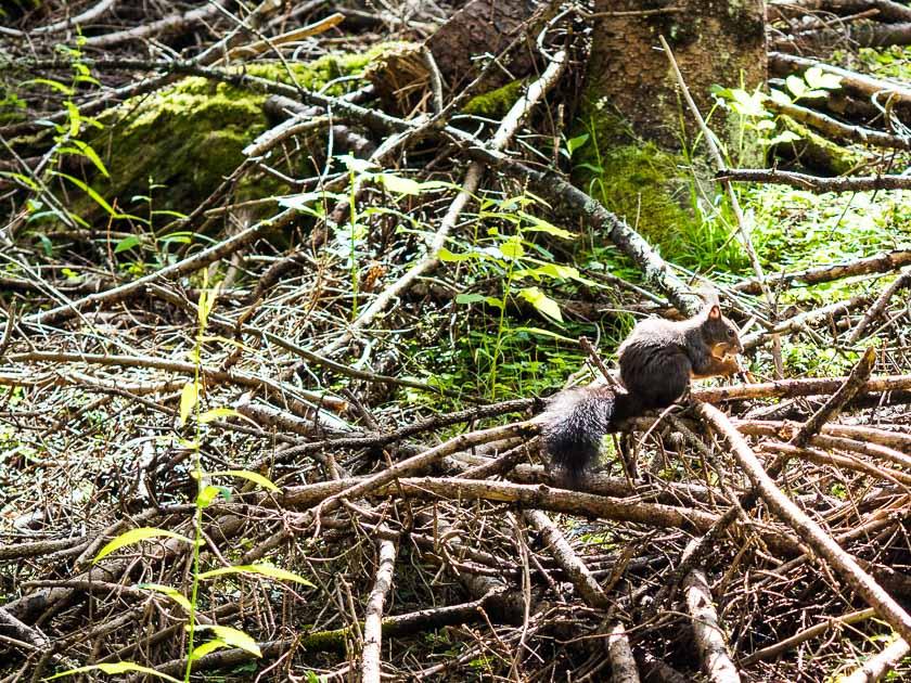 Gasteinertal mit Kindern_Eichhörnchen