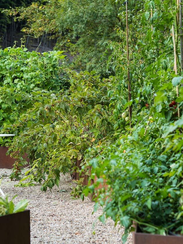 Gartenträume für Familien_Mischkultur