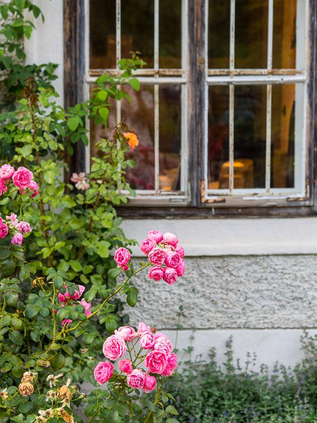 Gartenträume für Familien_Rosen