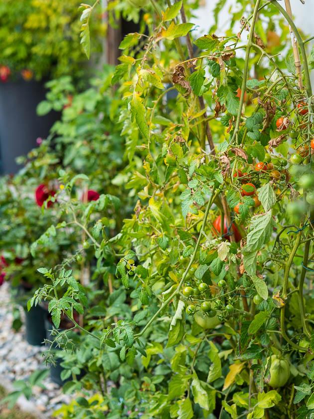 Gartenträume für Familien_Erntezeit