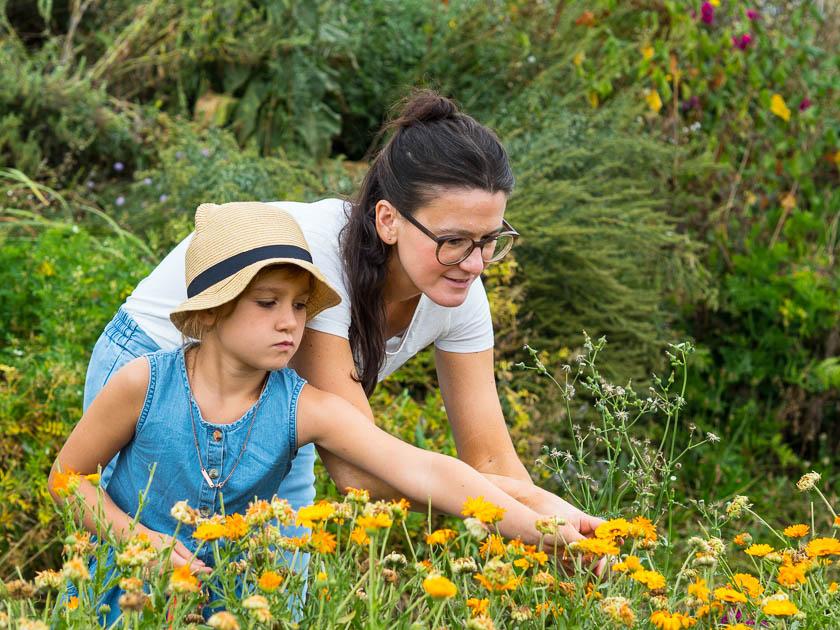 Landlofts von Sonnentor_Ringelblumen ernten