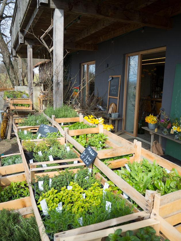 Familien-Küchengarten_Kräuter, Jungpflanzen, Blumen