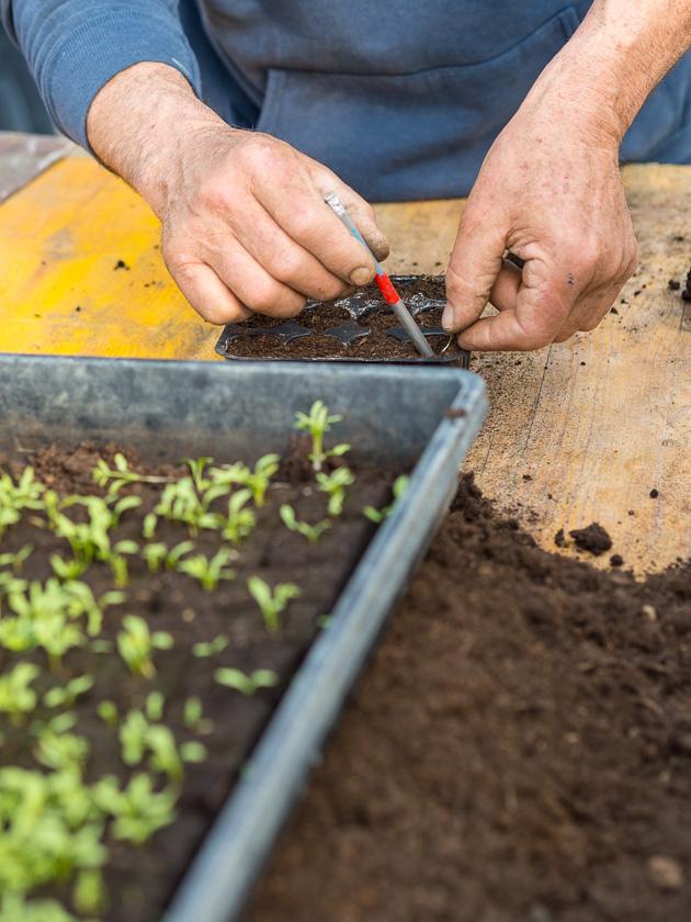 Familien-Küchengarten_Gemüse anbauen