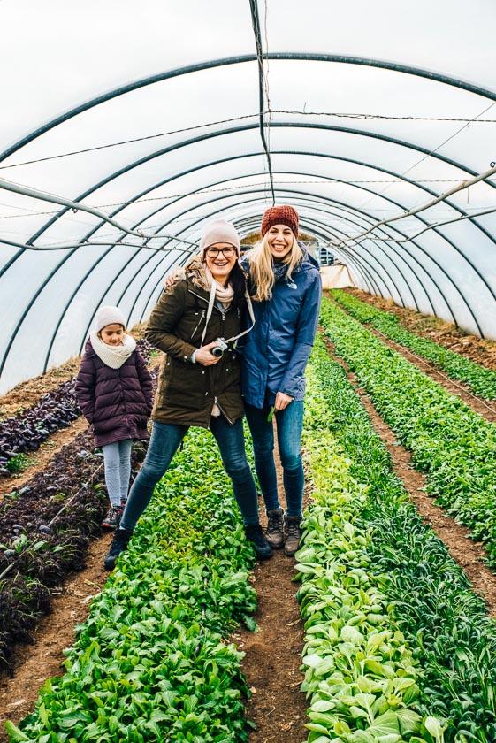 Frühlingsrezept mit Feldsalat_Folientunnel Salate