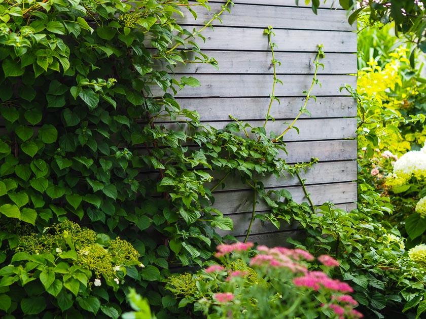 Familiengarten für Faule_Gartenhaus