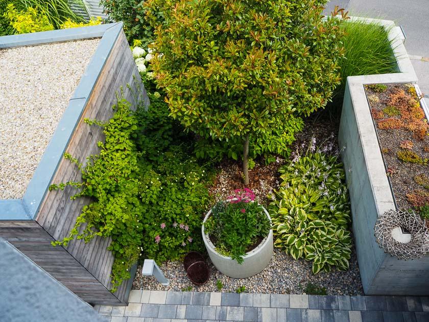 Familiengarten für Faule_Vorgarten