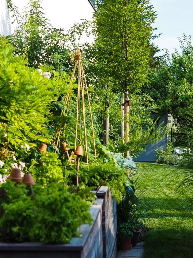 Familiengarten für Faule_Gemüsegarten