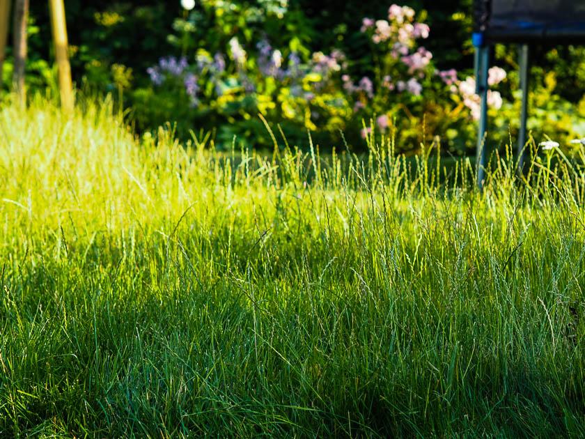 "Familiengarten für ""Faule""_Wildkräuterwiese"