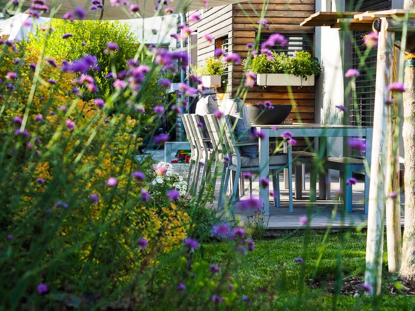 Familiengarten für Faule_Patagonisches Eisenkraut