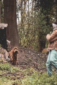 Hund als Haustier-15