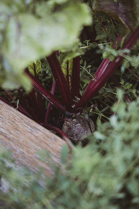 Gemüse Hochbeet