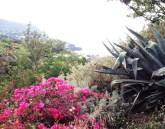 Immagini dell'isola di Salina