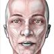 Visión esquemática de la musculatura de la cara