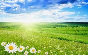 sunsky-and-flowers
