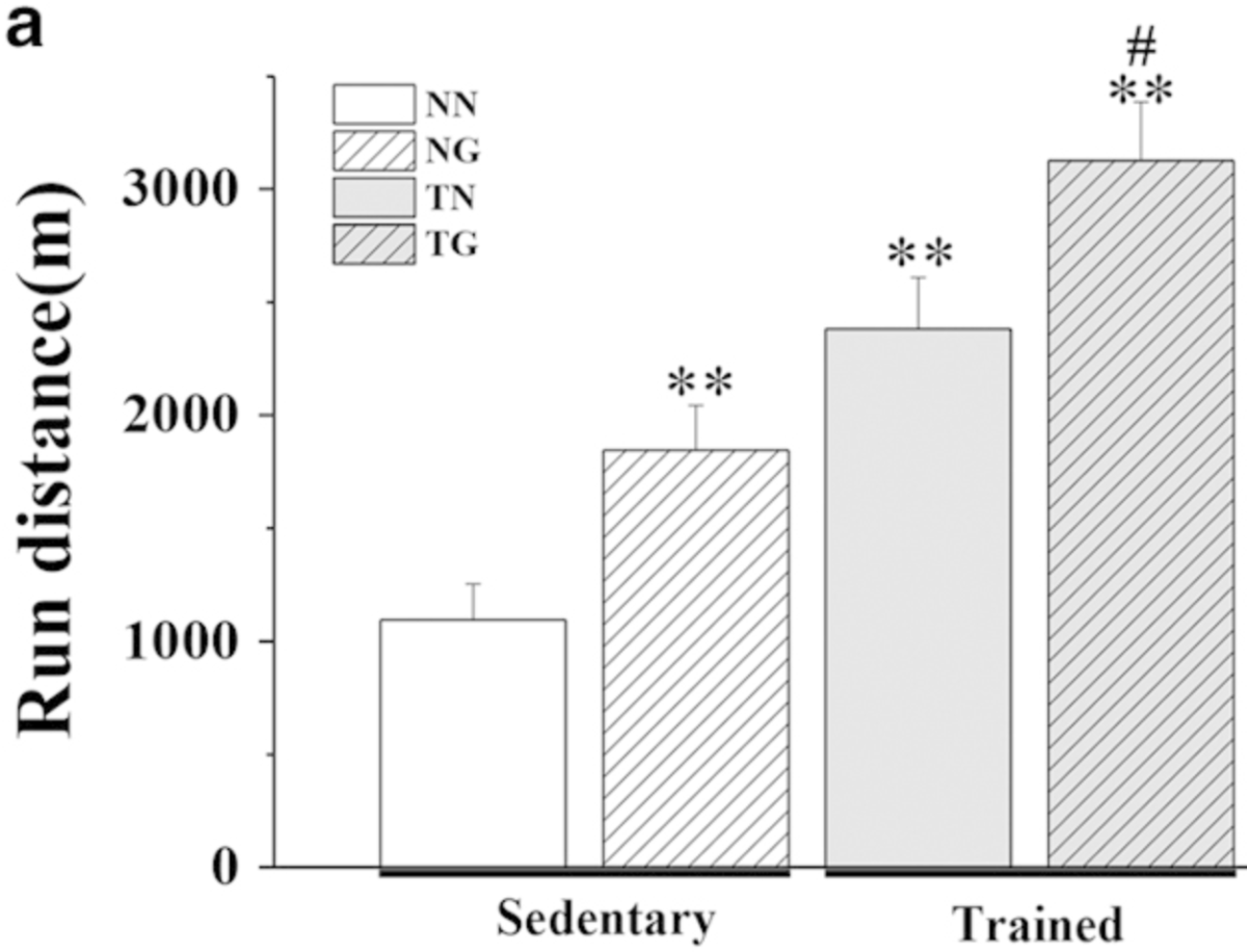 The effects of GW501516 on running performance in sedentary and trained KM mice. Forced wheel running endurance tests were performed following 3 weeks of treatment. (a) shows the total distance ran by mice in each group.
