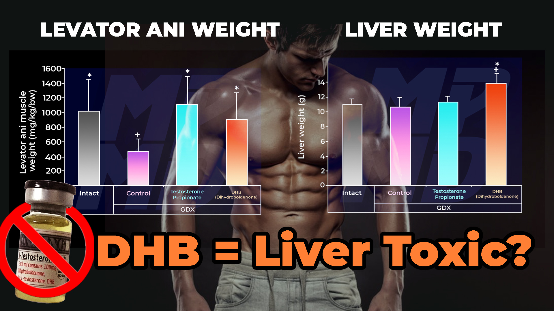 Bottle Of DHB (Dihydroboldenone) Beside Charts Depicting The Effects Of Testosterone Propionate and DHB (Dihydroboldenone) on Levator Ani Muscle Weight in orchiectomised rats and the Effects Of Testosterone Propionate and DHB (Dihydroboldenone) on Liver Weight in orchiectomised rats