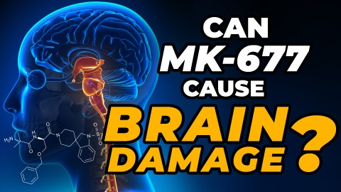 Does MK-677 cause brain damage? The question is posed beside a picture of a human brain, highlighting the importance of this question.