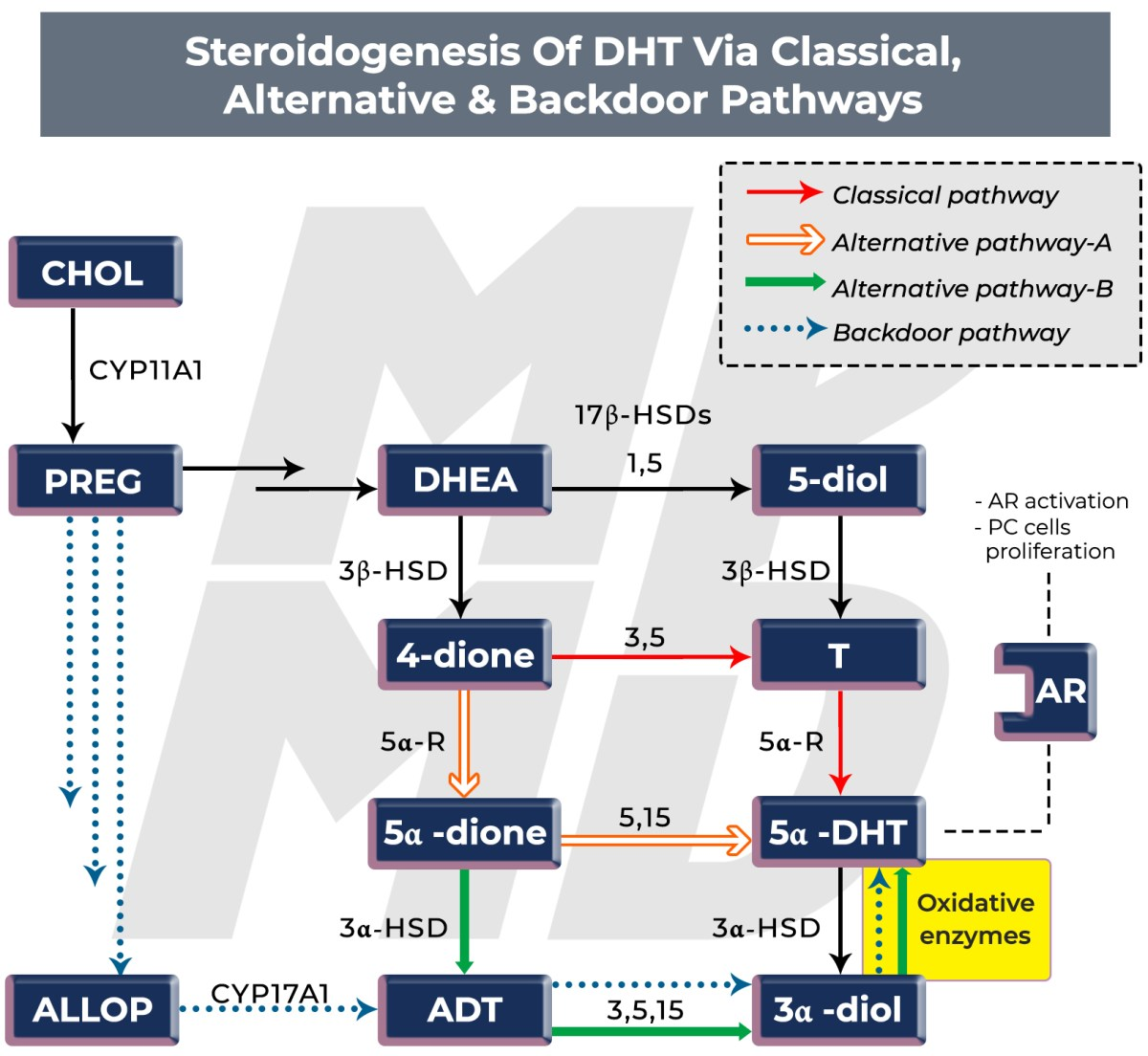 Simplified steroidogenesis of potent androgen DHT via classical, alternative and backdoor pathways