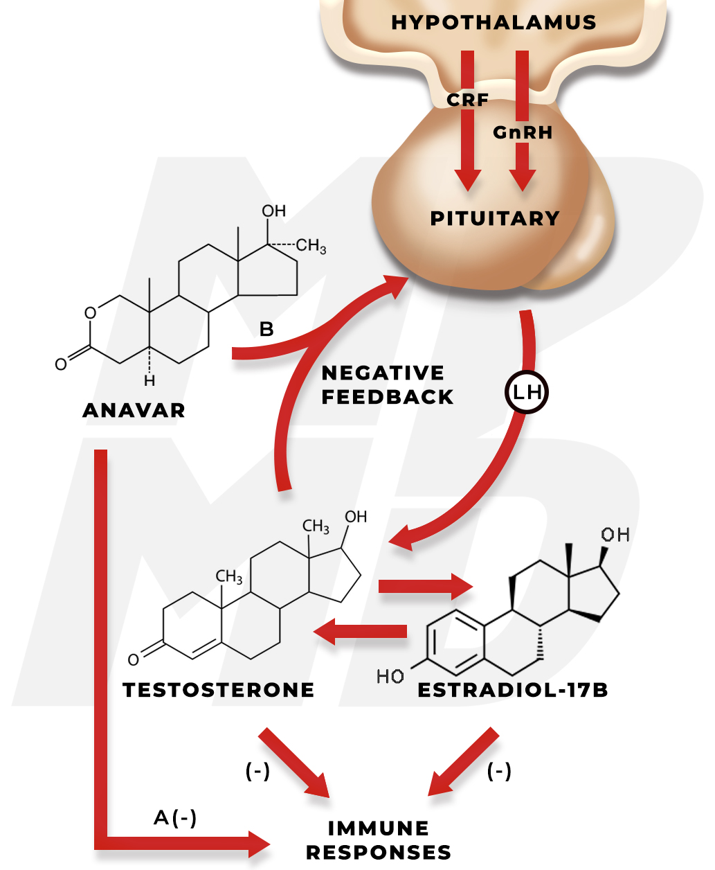 Hypothesis Of How Anavar Affects The Immune System