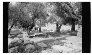 הרב ביבאס יהודה